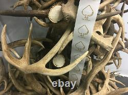 10kg Wholesale Red Deer Antlers for Crafts, Dog Chews, Taxidermy, Art and Deco